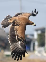 eagle yjimage