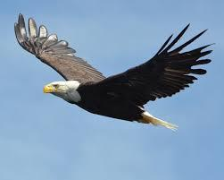 eaglesor yjimage
